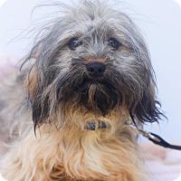 Adopt A Pet :: Peter Pan - Loomis, CA