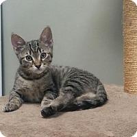 Adopt A Pet :: Brent - Ventura, CA