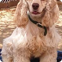 Adopt A Pet :: Zoey - Santa Barbara, CA