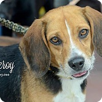 Adopt A Pet :: Leroy - Willingboro, NJ