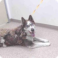Adopt A Pet :: A060261 - Palmer, AK