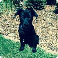Adopt A Pet :: Finn - Brooklyn Center, MN
