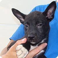 Adopt A Pet :: Thunder - Oviedo, FL