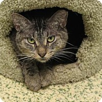 Adopt A Pet :: Speedy - Indianapolis, IN