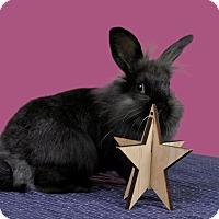 Adopt A Pet :: Nightfury - Marietta, GA