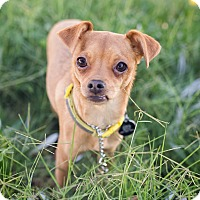 Adopt A Pet :: Princess - Oakley, CA
