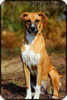 Golden Retriever/German Shepherd Dog Mix Dog for adoption in Dixon, Kentucky - Tessa