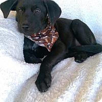 Adopt A Pet :: Buck (MD-Kelly) - Newark, DE