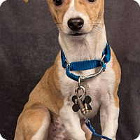 Adopt A Pet :: Puppies! - Davis, CA