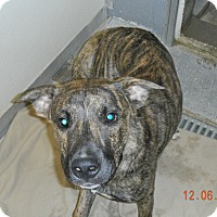 Adopt A Pet :: KON - Sandusky, OH