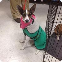 Adopt A Pet :: Houdini - Denver, CO