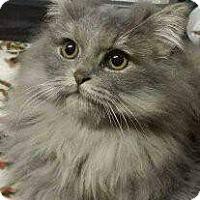 Adopt A Pet :: Zaher - Ennis, TX