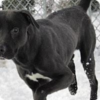 Adopt A Pet :: Pop - Windsor, VA