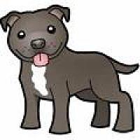 Adopt A Pet :: URGENT on 2/2 SAN BERNARDINO - San Bernardino, CA