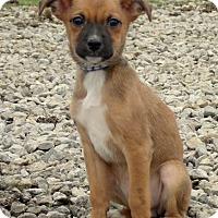Adopt A Pet :: BAMBI ~4.4LBS - Waterbury, CT