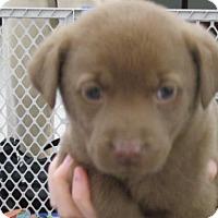 Adopt A Pet :: Sofie - Rocky Mount, NC