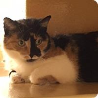 Adopt A Pet :: Salsa - Grayslake, IL