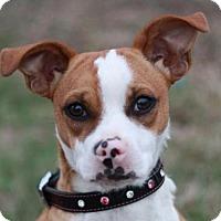 Adopt A Pet :: Harley - Nanuet, NY