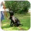 Photo 2 - Boxer/Labrador Retriever Mix Dog for adoption in Kingwood, Texas - Jewel