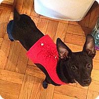 Adopt A Pet :: Avery - Bardonia, NY