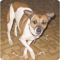 Adopt A Pet :: Abbey Gayl - Topeka, KS