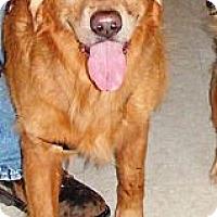Adopt A Pet :: Jack - Murdock, FL