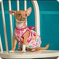 Adopt A Pet :: Rosie - Owensboro, KY