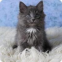 Adopt A Pet :: Beatrice - Eagan, MN