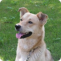 Adopt A Pet :: Spike - Rigaud, QC