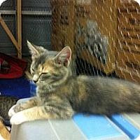 Adopt A Pet :: Peaches - Spotsylvania, VA
