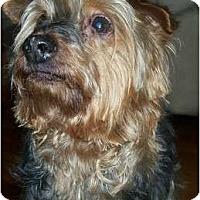 Adopt A Pet :: Curtis - LE MESA, CA