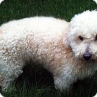 Adopt A Pet :: Tex - Toronto, ON