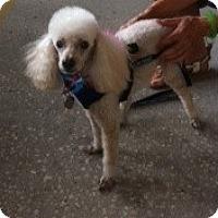 Adopt A Pet :: SEVEN - Melbourne, FL