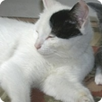 Adopt A Pet :: Jolie - Vancouver, BC