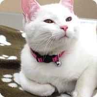 Adopt A Pet :: Olaf & Raja - Horsham, PA