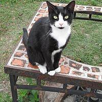 Adopt A Pet :: Bekky - Zolfo Springs, FL