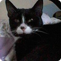 Adopt A Pet :: Skye - Fairborn, OH