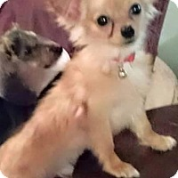 Adopt A Pet :: Bubba - Gainesville, FL