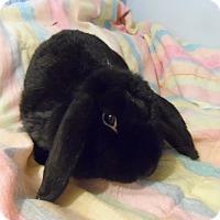 Adopt A Pet :: Rocky - Hillside, NJ