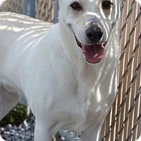 Adopt A Pet :: TJ - Roanoke, VA