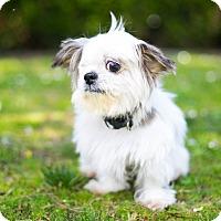 Adopt A Pet :: Ethel - Los Angeles, CA