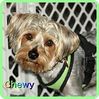Adopt A Pet :: Chewy - Hollywood, FL