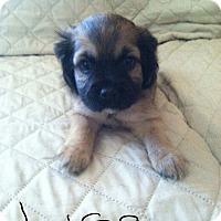 Adopt A Pet :: LISA - Rancho Cucamonga, CA