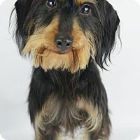 Dog Adoption Lafayette Co