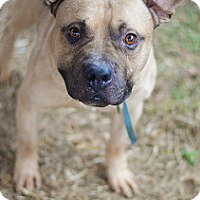 Adopt A Pet :: CRAIG (foster care) - Philadelphia, PA