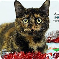 Adopt A Pet :: Karina - Belle Chasse, LA