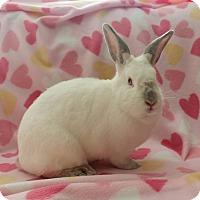 Adopt A Pet :: Maggie - Watauga, TX