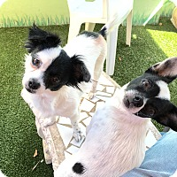 Adopt A Pet :: Thelma & Louise - Ft. Lauderdale, FL