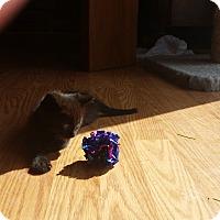 Adopt A Pet :: Gibbs - Fairborn, OH