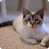 Adopt A Pet :: Tinee - Richmond, VA